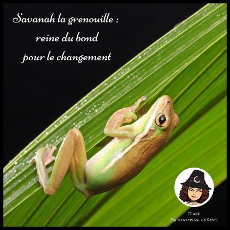 Savanah la grenouille _ reine du bond pour le changement - Diane Enchanteresse en Santé