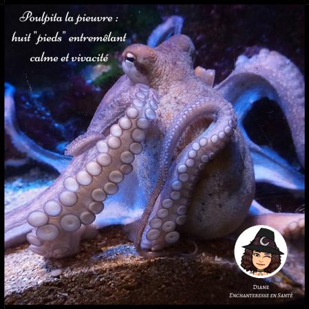 Poulpita la pieuvre huit pieds entremêlant calme et vivacité - Diane Enchanteresse en Santé